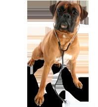 veterinarian-dog